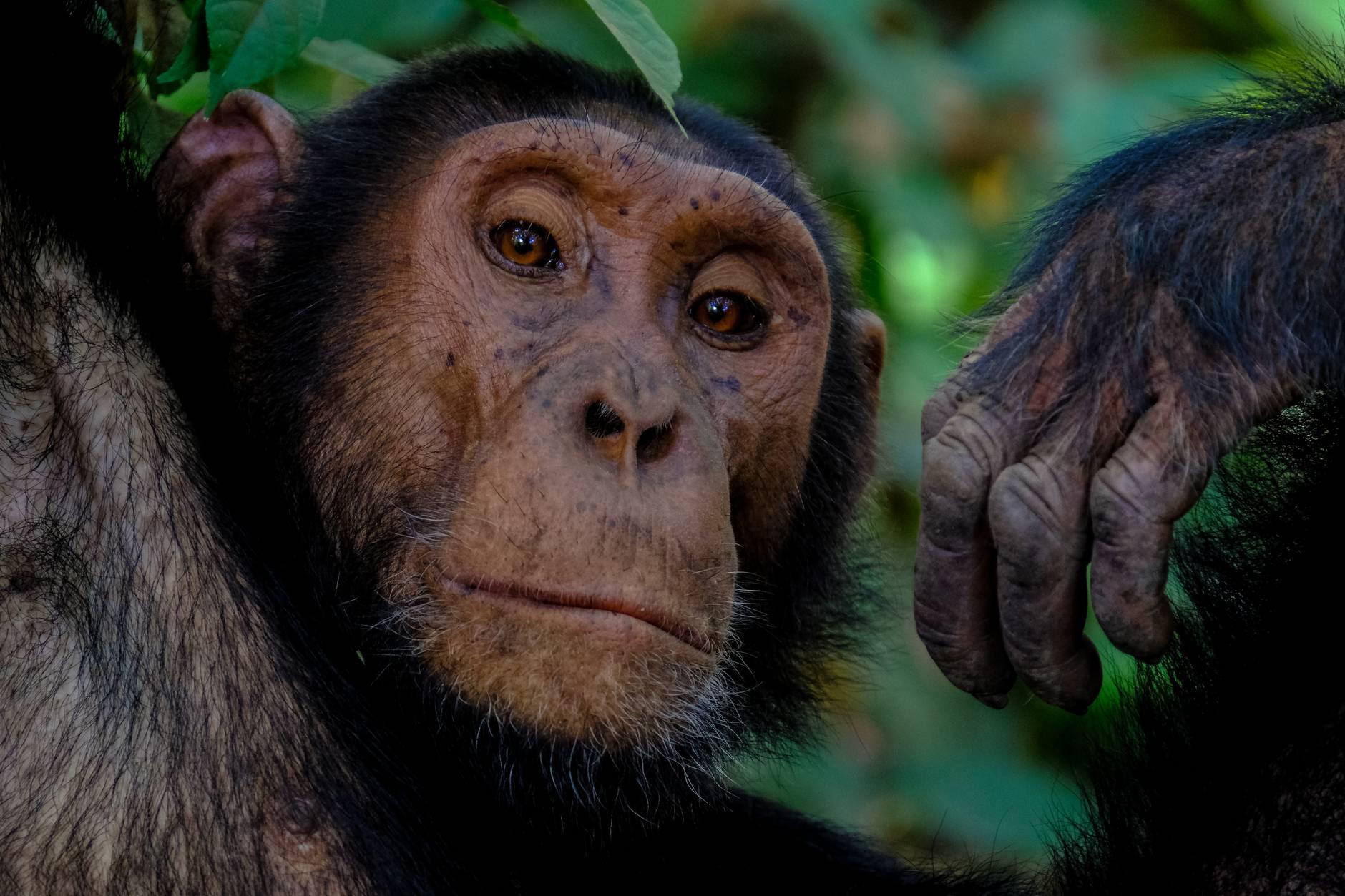 photography of monkey